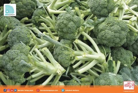 Pemupukan Brokoli Tepat dan Berimbang Hasil Maksimal, Mau?