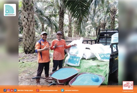 Mengintip Keberhasilan Pak Tono, Petani Sawit di Jambi