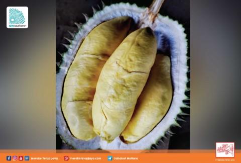 Pemupukan Durian yang Tepat dan Berimbang