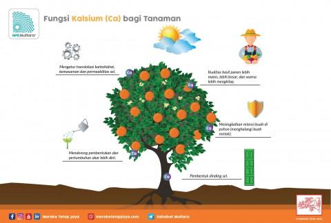 Fungsi Kalsium Bagi Tanaman