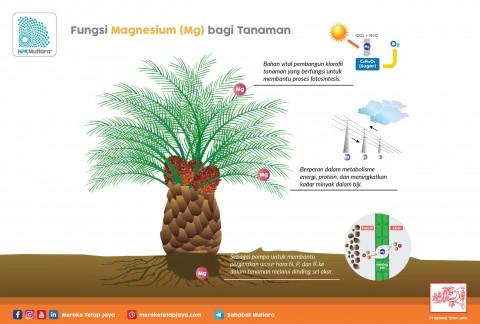 Fungsi Magnesium Bagi Tanaman