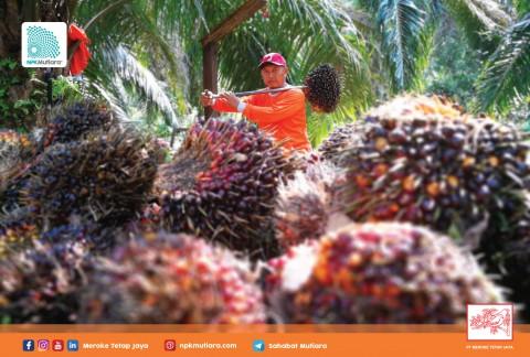 PT Meroke Tetap Jaya Lengkapi Kebutuhan Nutrisi Sawit