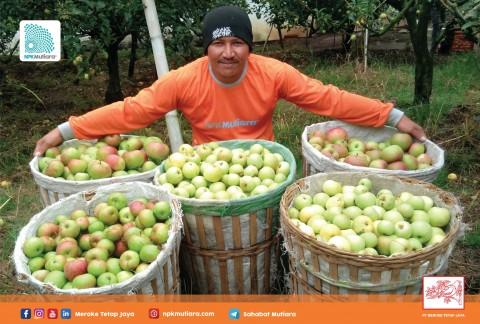 Nutrisi Tepat untuk Apel
