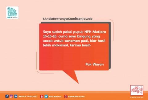 #ABKM Program Pemupukan Padi dengan NPK Mutiara 16-16-16